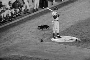69-cubs-ron-santo-black-cat-at-shea